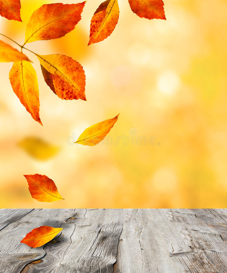 höstbakgrundscloseupen colors orange red för murgrönaleaf royaltyfria bilder