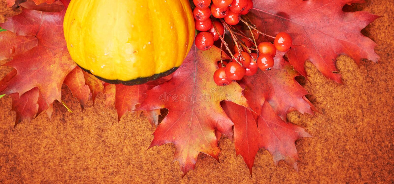höstbakgrundscloseupen colors orange red för murgrönaleaf royaltyfri foto