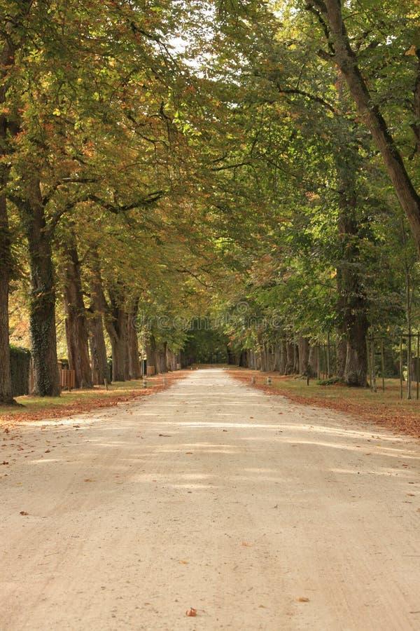 Höstbana till och med en skog