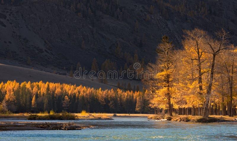 Höstberglandskapet med solbelysta träd och en förkylningblått rive royaltyfri bild