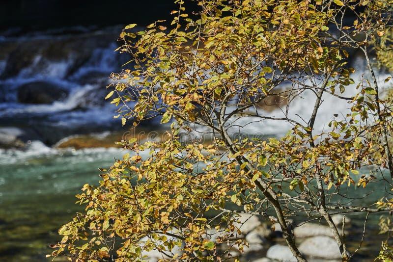 Höstblad på träd på floden arkivfoto