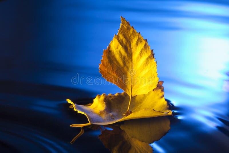 Höstbladskepp i blått vatten royaltyfria foton