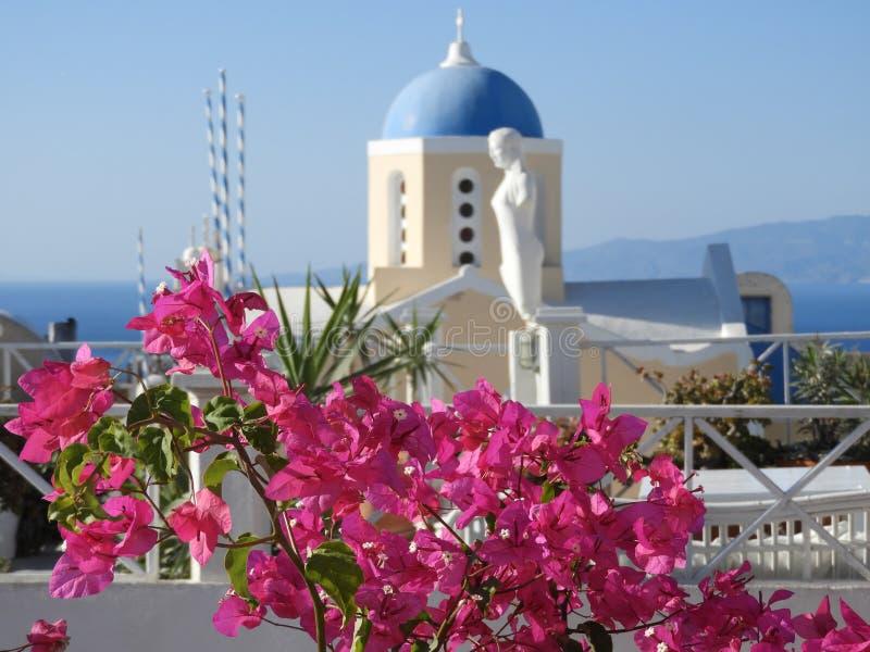Höstblommor, Santorini, Grekland, sommar arkivbilder