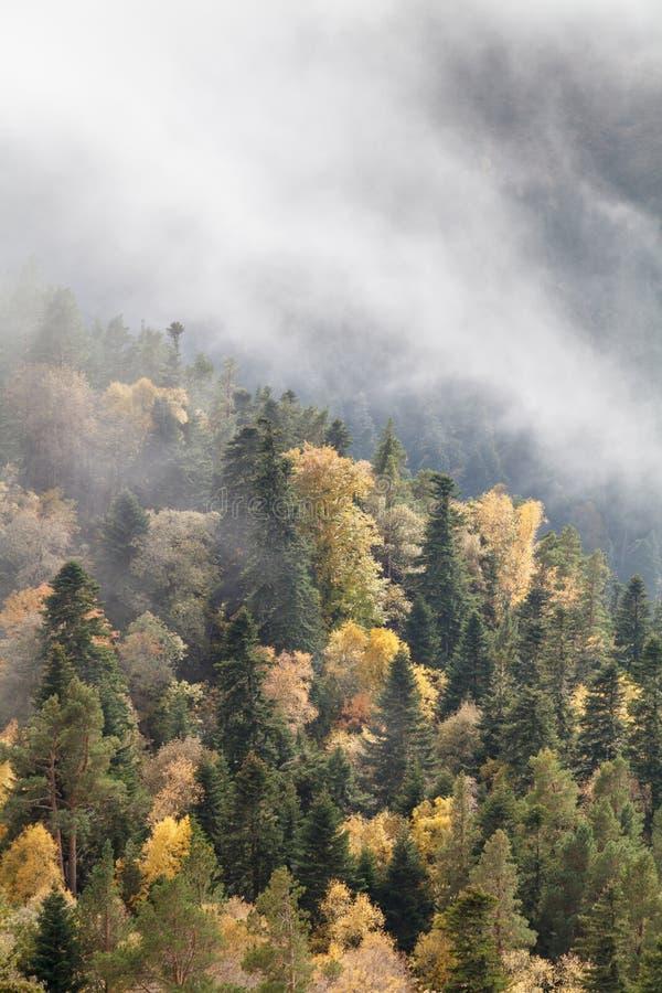 Höstdag i bergen royaltyfri foto