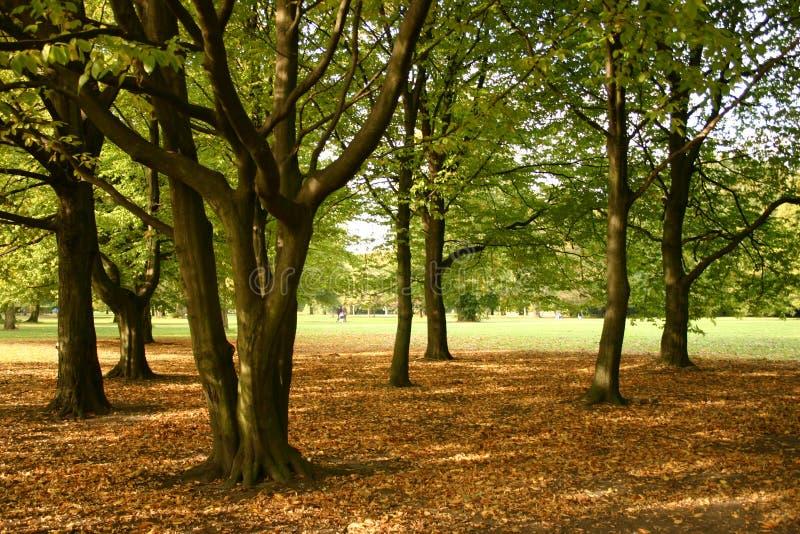 Download Höstdag ii fotografering för bildbyråer. Bild av leaves - 30739