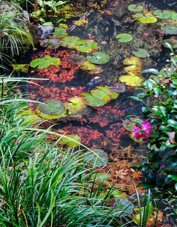 Höstdamm på japanträdgården arkivbild