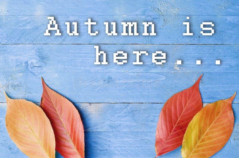 Hösten är här skriftligt på blått, träbakgrund med färgglade sidor royaltyfri bild