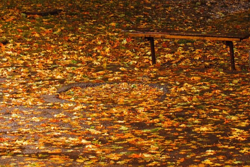 Download Hösten benches parken arkivfoto. Bild av floror, plats - 78732260