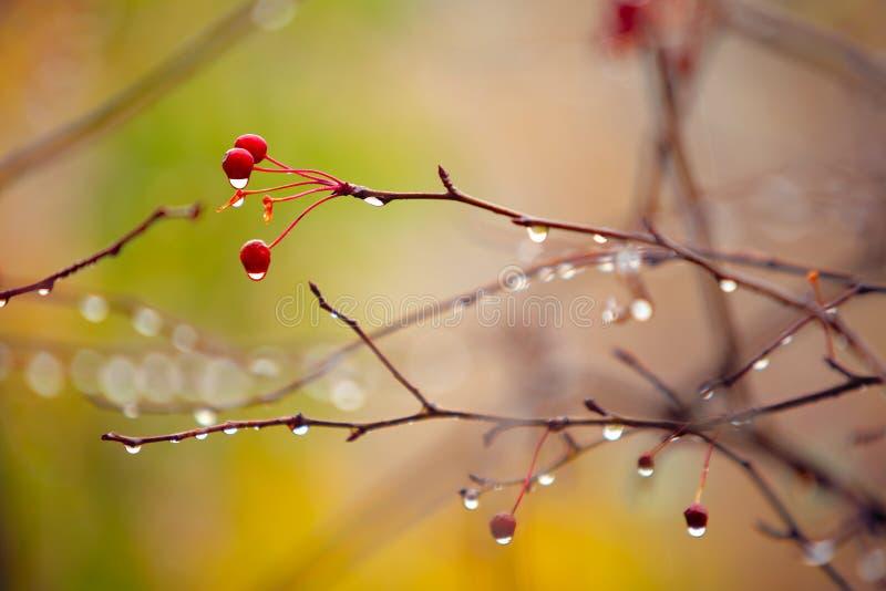hösten branches regn under arkivbild