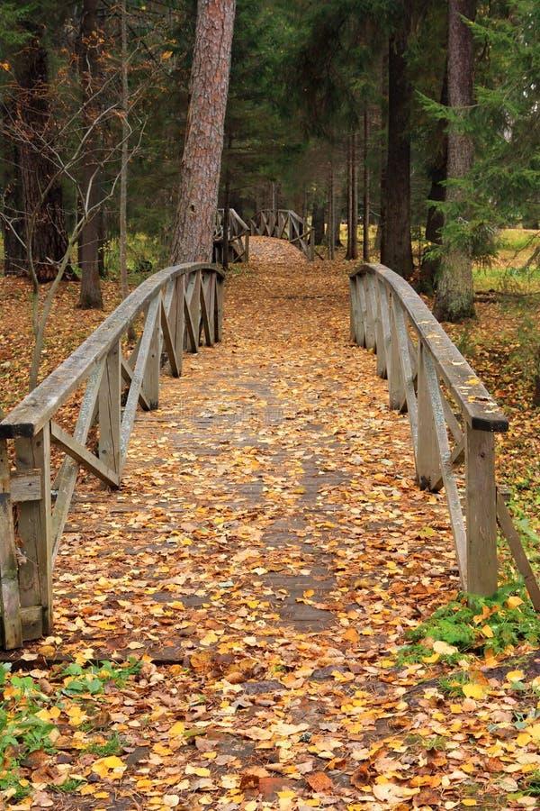 hösten bridges den träskogen royaltyfri bild