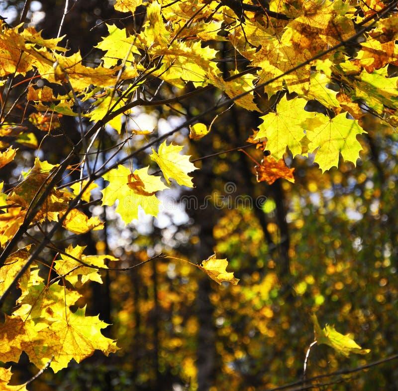 hösten colors parken arkivbild