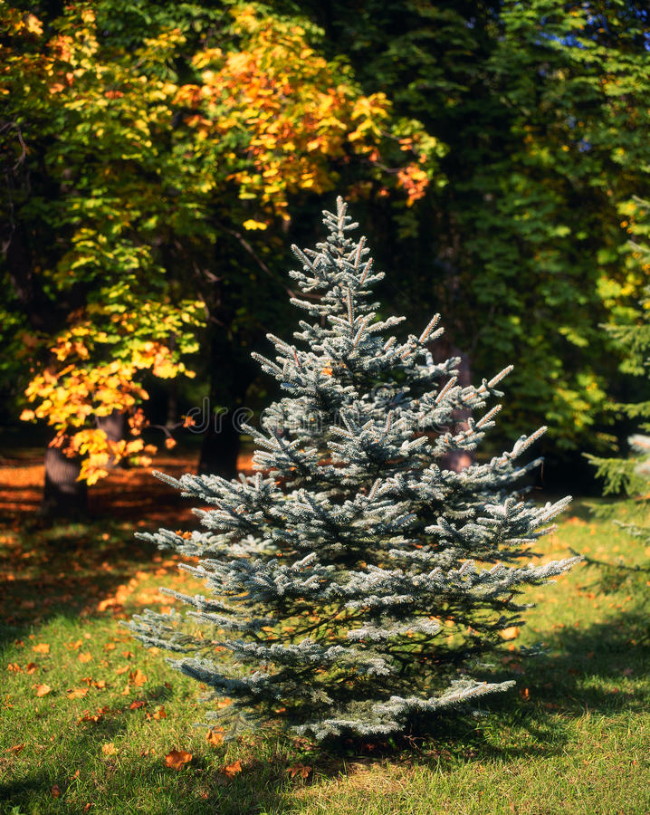hösten colors symbios arkivbilder