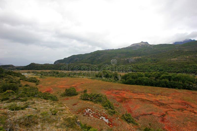 Hösten färgade landskap längs vägen till Puerto Williams, Tierra Del Fuego, Chile arkivbild