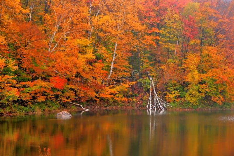 Hösten färgade nedgångsidor reflekterade i bäverdammet arkivfoton