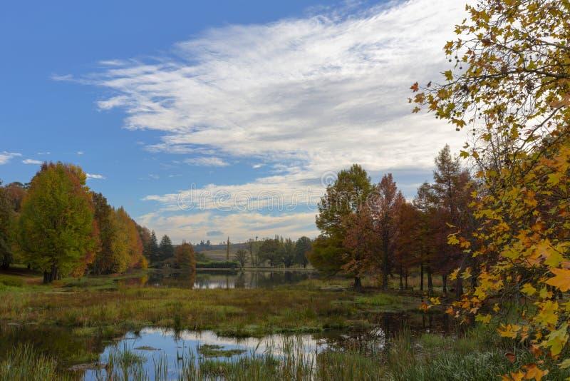 Hösten färgade träd och blå himmel arkivfoton