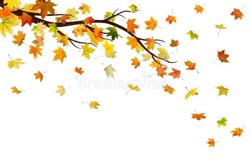 Hösten förgrena sig