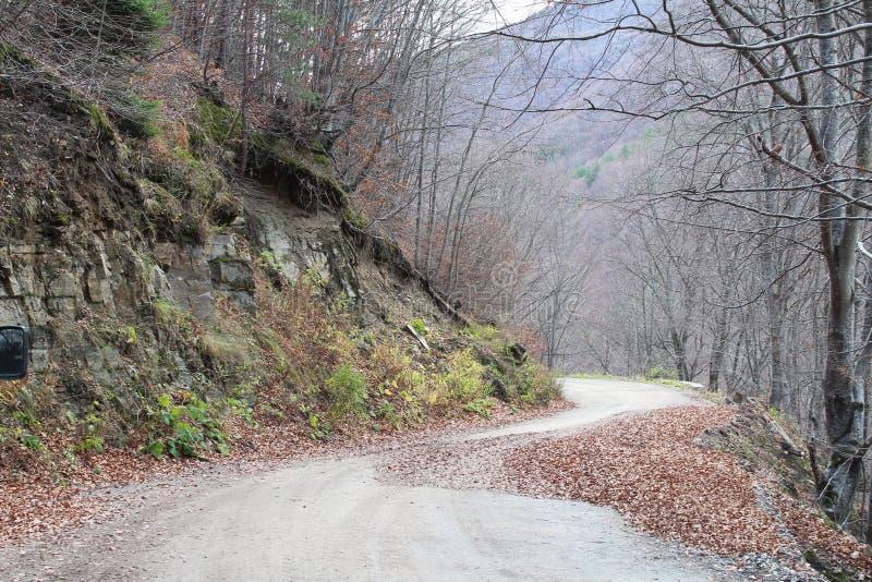 Hösten går i berget royaltyfri fotografi