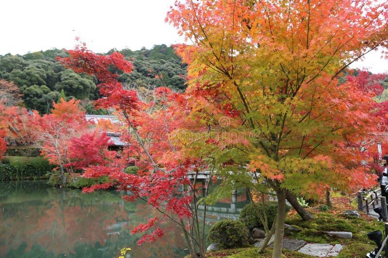 Hösten i parkerar i Japan royaltyfri bild