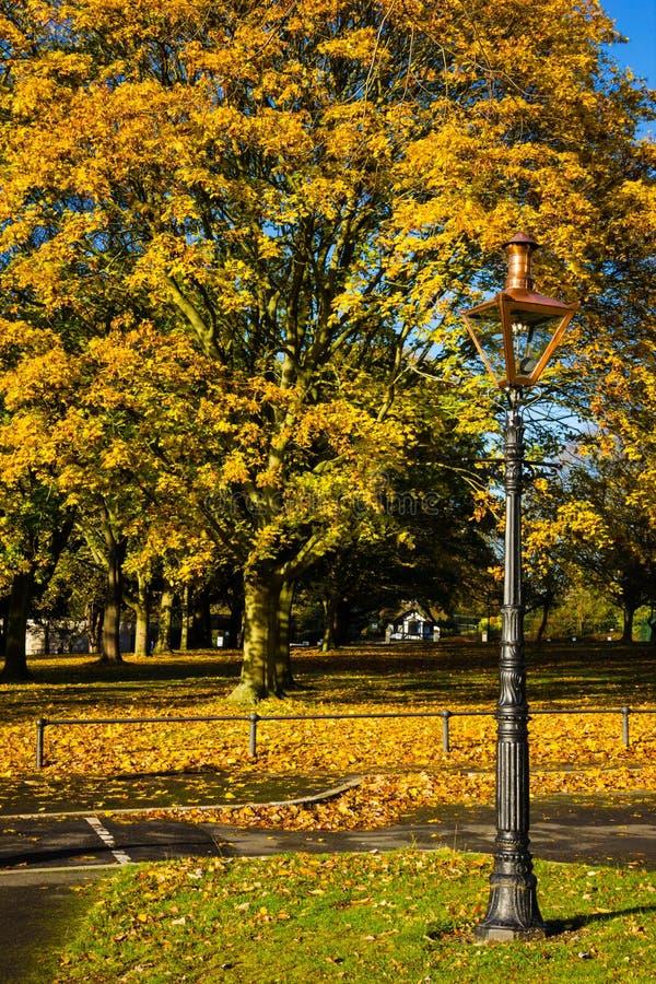 Hösten i Phoenix parkerar dublin ireland royaltyfria bilder