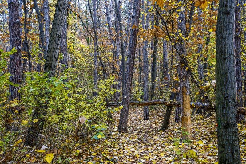 03_Hösten i Vitosha-berget, Sofia, Bulgarien royaltyfria foton