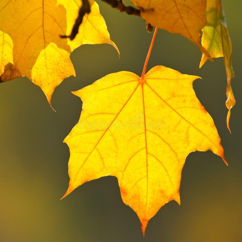 Download Hösten lämnar arkivfoto. Bild av växt, färg, organiskt - 27284938