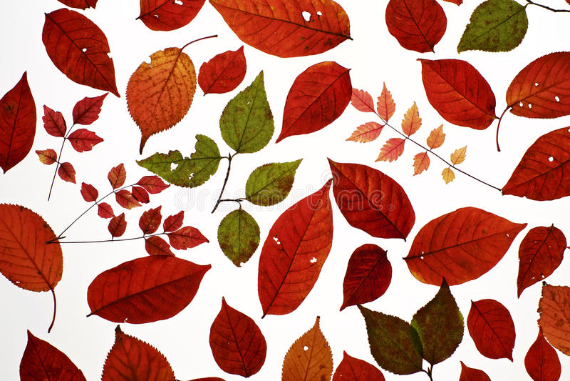 Hösten lämnar arkivbild