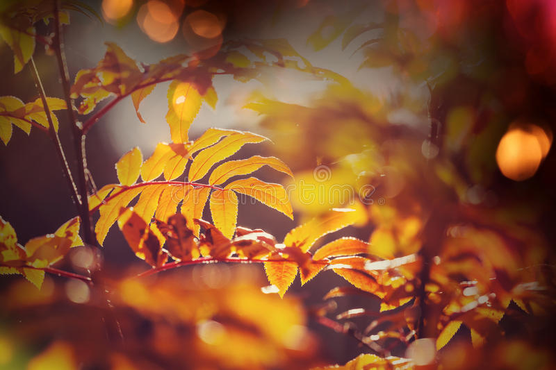 Download Hösten lämnar arkivfoto. Bild av naturligt, fira, säsong - 76703716
