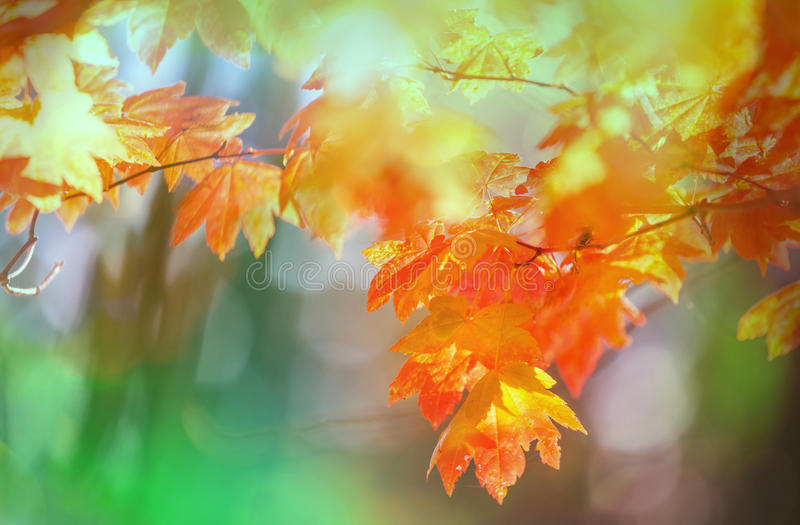 Download Hösten lämnar fotografering för bildbyråer. Bild av glöd - 76703759