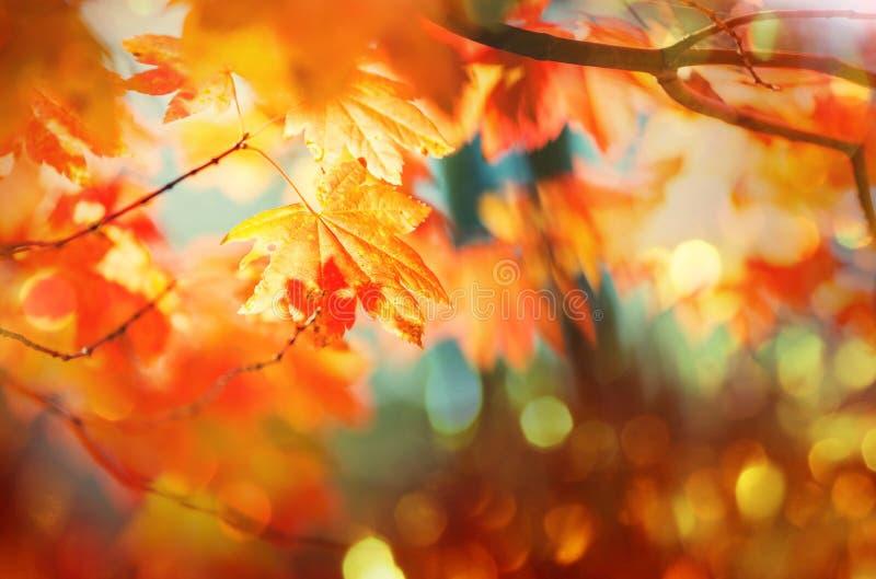Download Hösten lämnar fotografering för bildbyråer. Bild av fall - 76703951