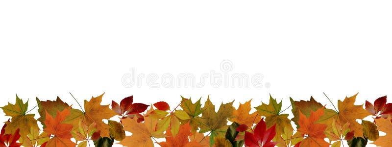 Hösten lämnar för att gränsa royaltyfri foto