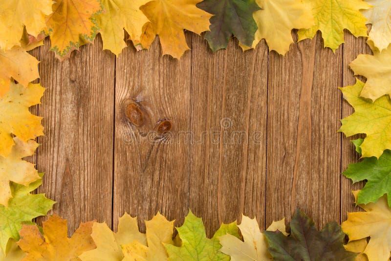 Hösten lämnar för att inrama arkivfoton