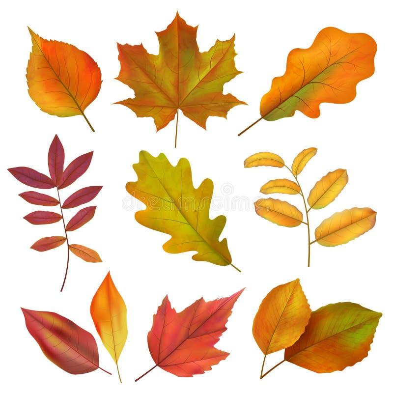 Hösten lämnar Realistisk guling och rött nedgångblad Isolatvektoruppsättning stock illustrationer