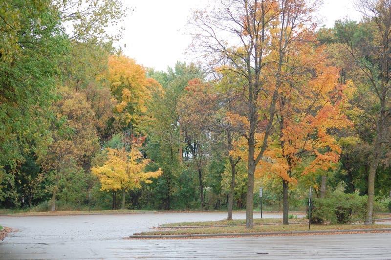 hösten låter vara parken royaltyfri bild