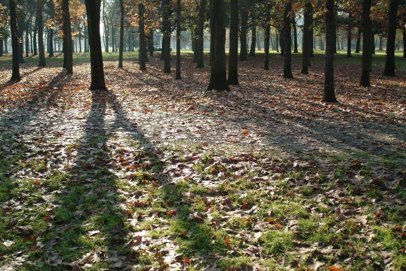hösten låter vara skuggor arkivbild