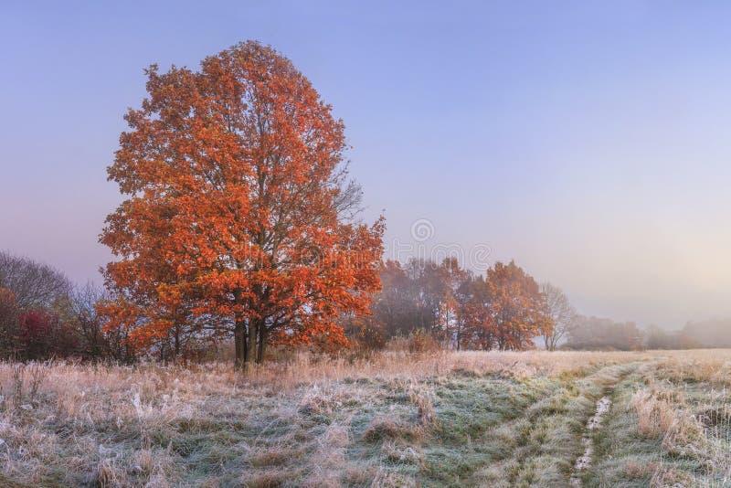 Hösten landskap Fantastisk nedgång i november Höstlig natur för morgon Kall äng med rimfrost på gräs och röd lövverk på träd arkivfoton