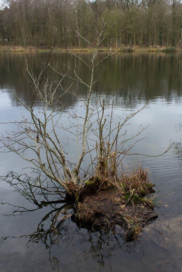 Hösten landskap på laken royaltyfri foto