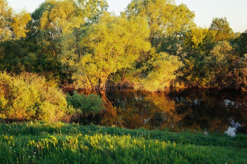 Hösten landskap Hösten landskap Skoghöstträd nära floden på solnedgången Höstlandskapplats fotografering för bildbyråer