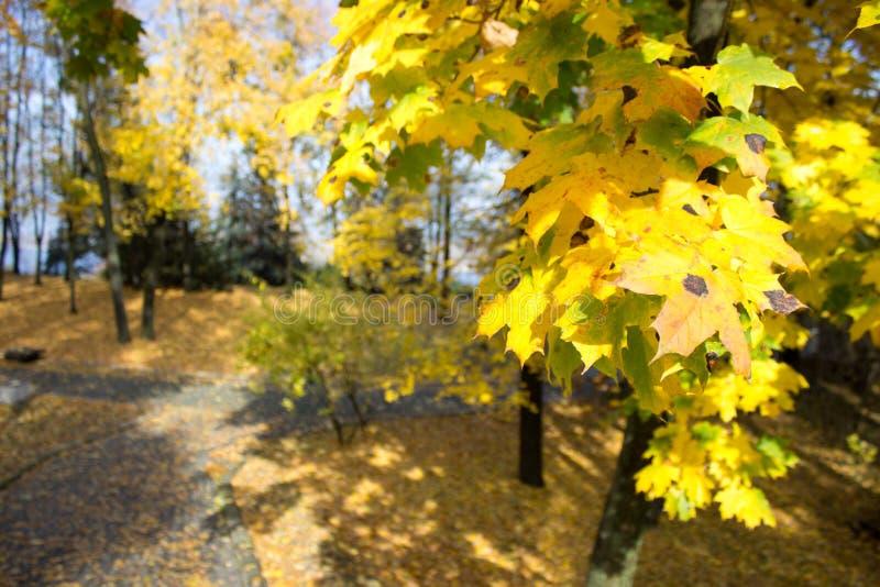 Hösten parkerar royaltyfri fotografi
