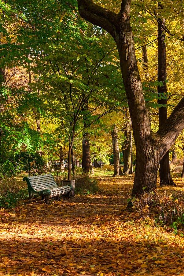 Hösten parkerar gränden med bänken royaltyfri fotografi