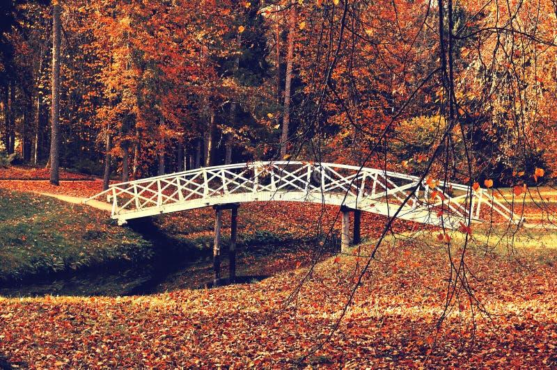 Hösten parkerar landskap - den lilla vita träbron i hösten parkerar bland de röda höstträden och torkar höstsidor royaltyfri fotografi