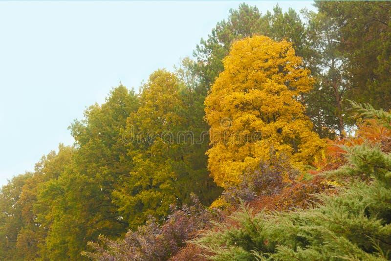 Hösten parkerar med det gula trädet arkivbilder