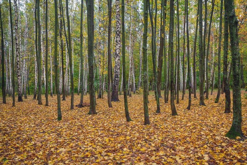 Hösten parkerar med gula stupade sidor arkivfoto