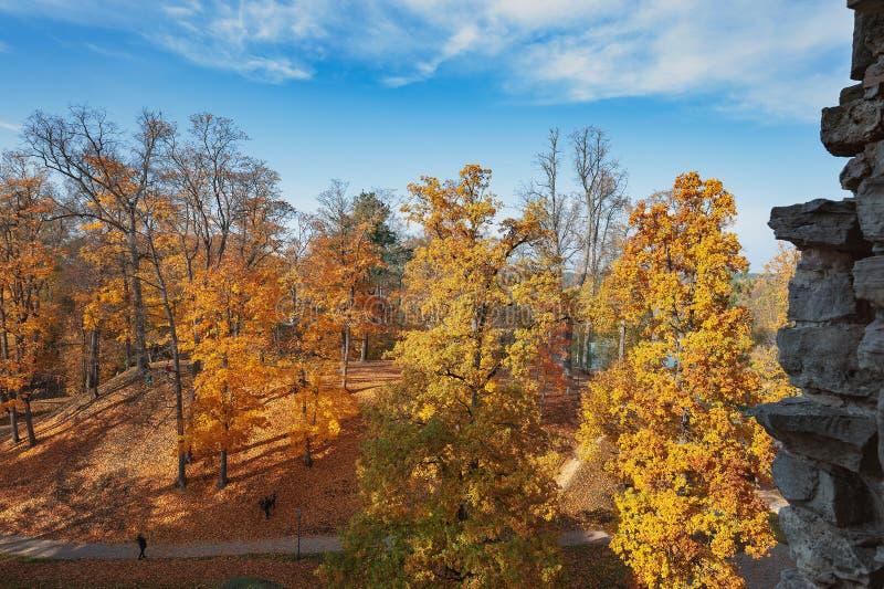 Hösten parkerar med gula träd i Cesis, Lettland arkivfoto