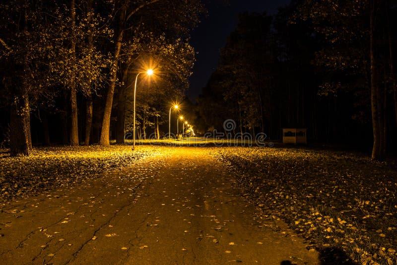 Hösten parkerar på natten glödande lampor Väg med höstsidor royaltyfria bilder