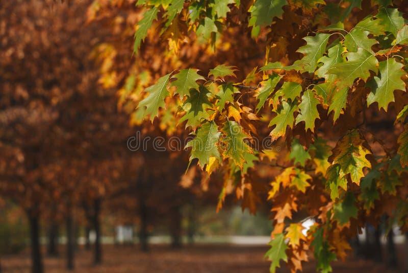 Hösten parkerar sidasolnedgång arkivbilder