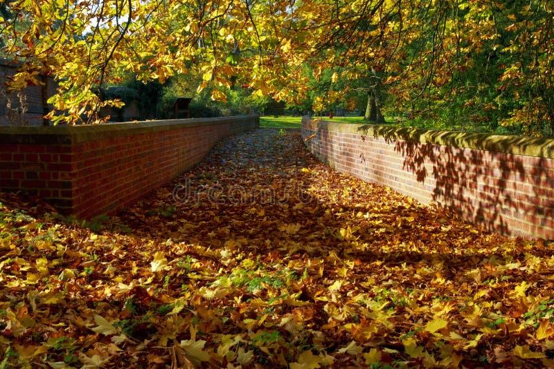 Hösten skuggar och sidor på den gamla lagledarebron arkivbild