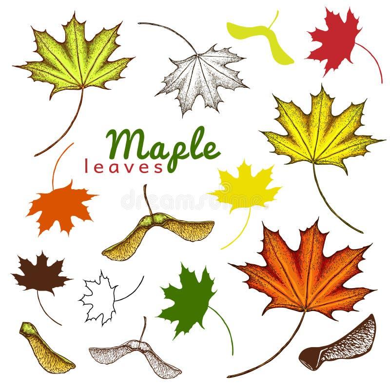 hösten ställde in av översiktsfärgpulver och kulöra lönnlöv och frö inristat lönnlöv och frö utdragen illustration för hand av ol stock illustrationer