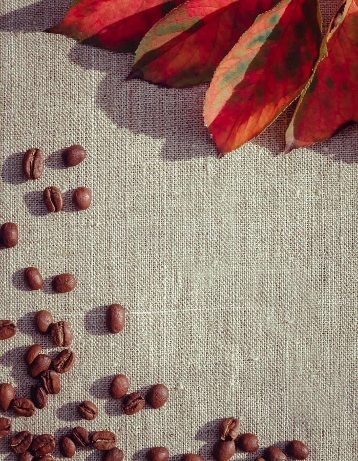 hösten tappar melankoliskt förser med rutor regnfönstret royaltyfria foton