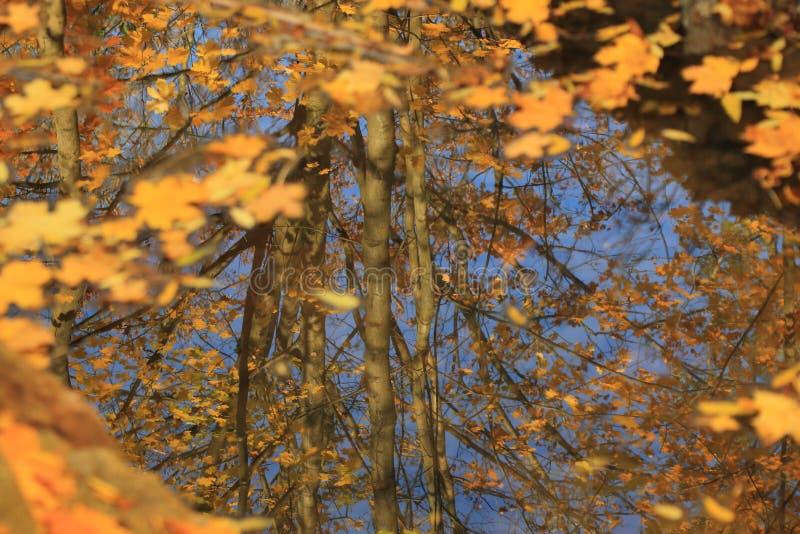 Höstens skönhet arkivfoton