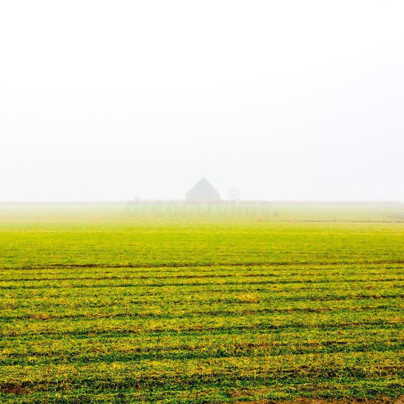 Höstfält i den morgonmistTexel ön, Nederländerna arkivfoton